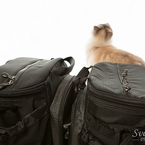 v2.0 vs. v1.0 - Cat View