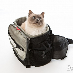 Fits a whole cat
